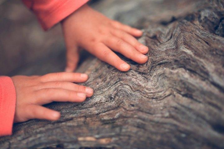legno-bimbo-mazzocchi legno strutture in legno