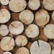 Mazzocchi legno azienda operante nel settore delle strutture in legno a Crespellano Comune Valsamoggia, ci guida in un viaggio alla scoperta dei legni più pregiati scelti per le nostre case.
